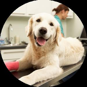 nos conseils pour votre chien clinique v t rinaire des passages. Black Bedroom Furniture Sets. Home Design Ideas
