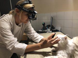 Examen ophtalmologique chat